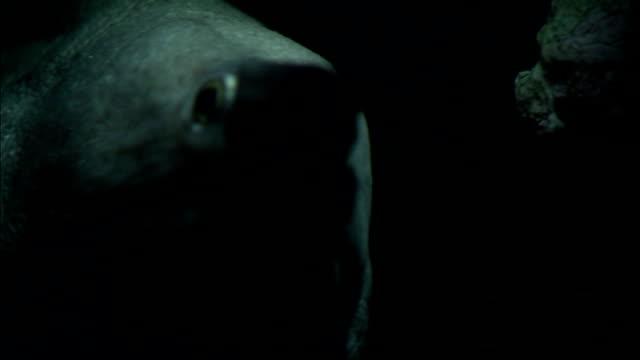 vídeos de stock e filmes b-roll de a moray eel's sharp teeth are prominent in its mouth. - moreia enguia de água salgada