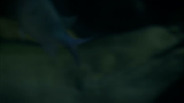moray eels swim with small fish in an aquarium. - muräne stock-videos und b-roll-filmmaterial