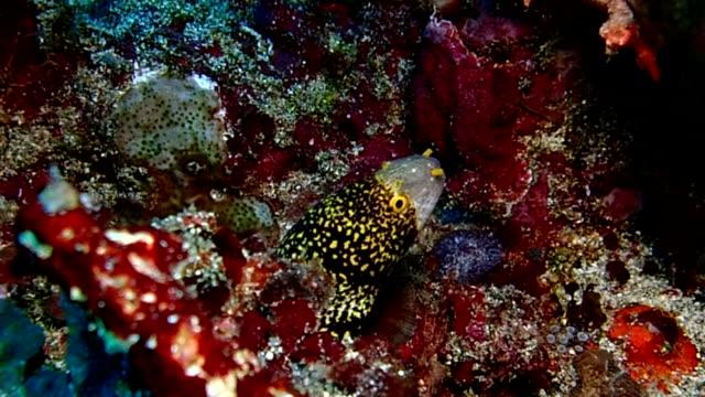 vídeos de stock e filmes b-roll de costa moray - coral macio