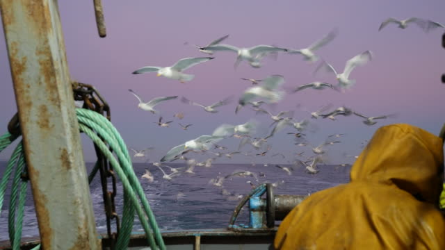 more details of the government's plans for fishing after brexit will be revealed tomorrow.at least in theory, brexit means that boats from other... - fishing industry stock videos & royalty-free footage