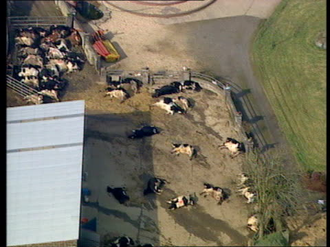 stockvideo's en b-roll-footage met spreads to continent itn dead cows laying in farmyard after being sluaghtered to try to prevent the spread of foot and mouth disease air view... - foot and mouth disease