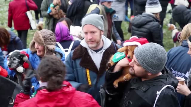 more than 300 dogs donned christmas jumpers for a charity fundraiser dogs in nordic knits and santa outfits joined the save the children fundraiser... - save the children stock videos & royalty-free footage