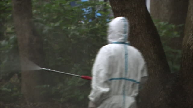 More than a hundred people are reported to have been infected with dengue fever which is transmitted by mosquitoes Many of them visited Yoyogi Park...