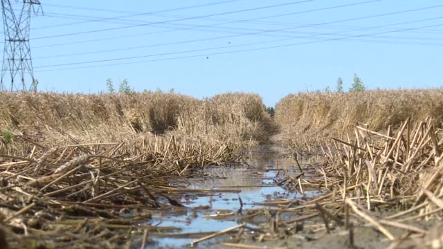 more than a month after flooding struck france's ile de france region farmers are facing the prospect of a poor harvest - ile de france stock videos and b-roll footage