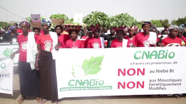 vídeos de stock e filmes b-roll de more than a thousand demonstrators take to the streets of ouagadougou to protest against the introduction of gmos in burkina faso - modificação genética