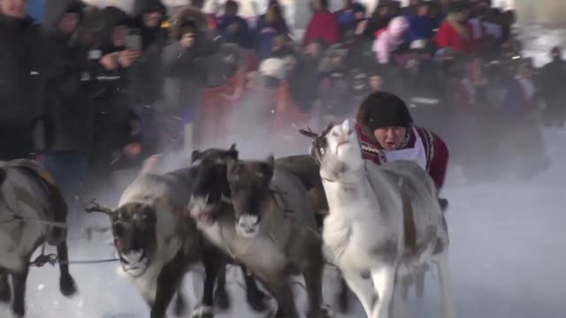 More than fifty indigenous Nenets nomads took part in the reindeer sled races during the traditional Reindeer Herders Days in the city of Nadym on...