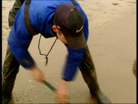 cockle pickers return to work itv lunchtime news tim rogers england lancashire morecambe bay cockle pickers on foot and on tractor away onto bay to... - itv lunchtime news stock videos & royalty-free footage