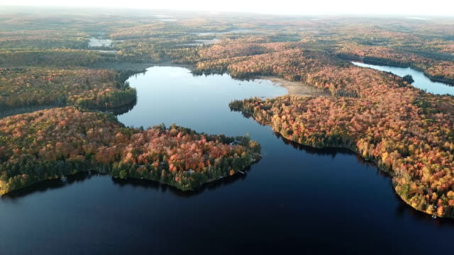 morning aerial view of simcoe's landscape in autumn,ontario , canada - boreal forest stock videos & royalty-free footage