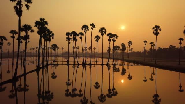 stockvideo's en b-roll-footage met 's morgens bij zonsopgang licht met suiker palmbomen, thailand. - handpalm