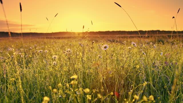DS Morgentau auf Frühjahr Rasen