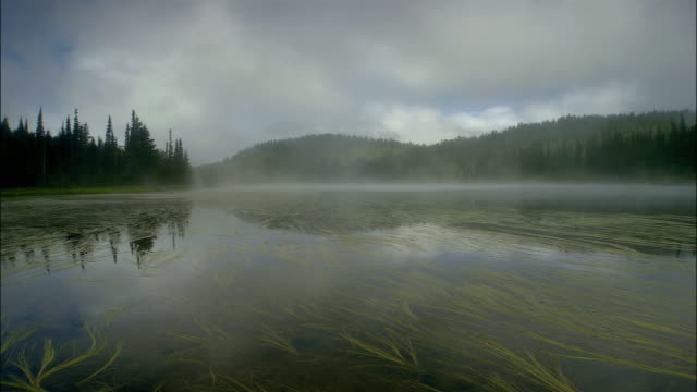 t/l, ws, pan morning fog above lake, mount rainer national park, washington, usa - mt rainier national park stock videos & royalty-free footage