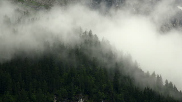 morning fog in mountain forest, grindelwald, bernese alps, canton of bern, switzerland - bernese alps stock videos & royalty-free footage