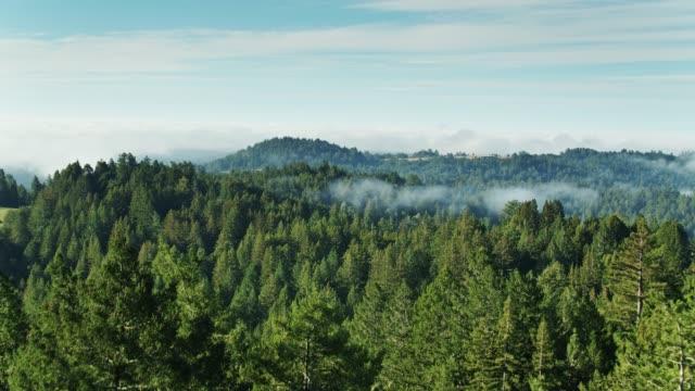 vídeos de stock, filmes e b-roll de névoa da manhã no condado de sonoma-antena - sequoia sempervirens