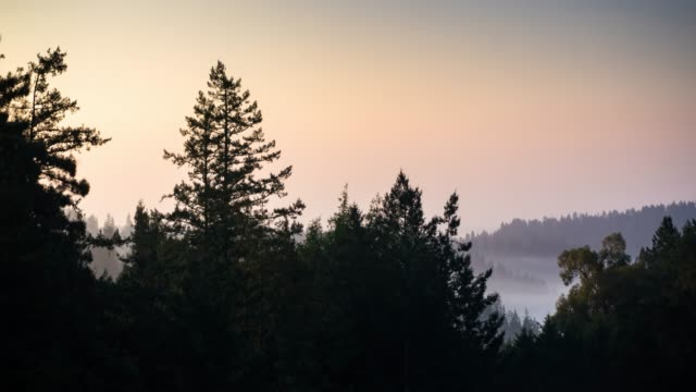Morning Fog in the Russian River Valley - Time Lapse