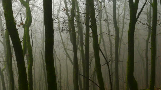 morning fog in woodland - bare tree stock videos & royalty-free footage