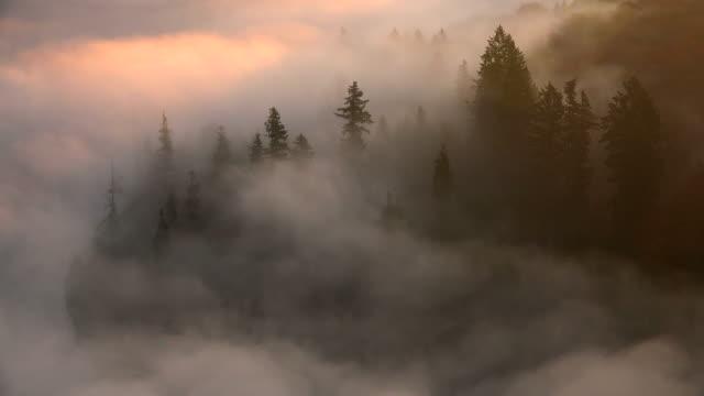 Morning fog in woodland