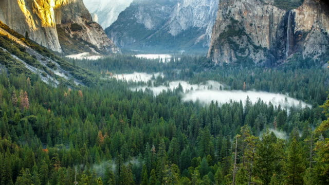 morning fog in yosemite valley, time lapse - treetop stock videos & royalty-free footage