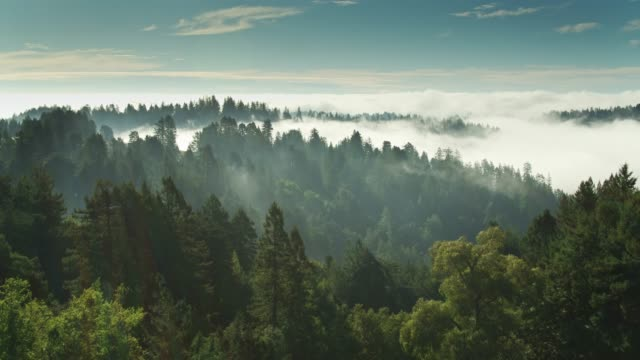 Morning Fog on Forested Hills - Aerial