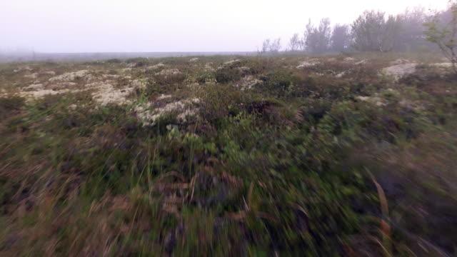 morgen nebel auf see - moos stock-videos und b-roll-filmmaterial