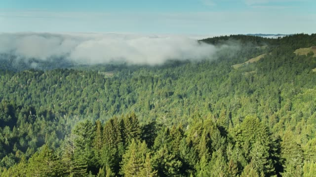 Morning Fog Sitting in Russian River Valley - Aerial