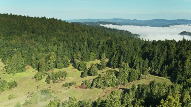 Morning Fog Sitting in the Russian River Valley - Aerial