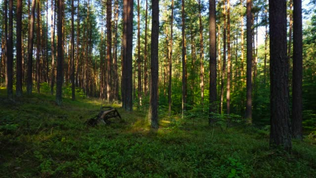 morning forest, time lapse - spiral staircase stock videos & royalty-free footage