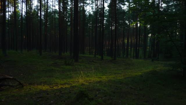 Morgen Wald, Zeitraffer