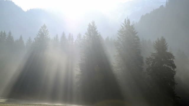 Morning in mountains, rays of light through trees in mist