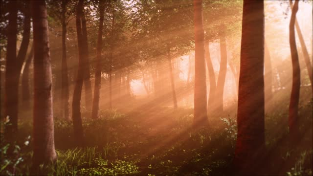 morning in the forest - immaginazione video stock e b–roll