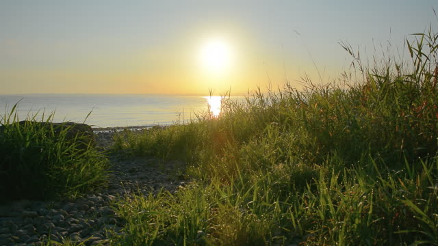 morning lakeshore - reed grass family stock videos and b-roll footage