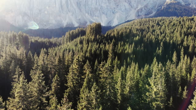 morning light above the pine forest with mountains in the italian alps. - trentino alto adige südtirol video stock e b–roll