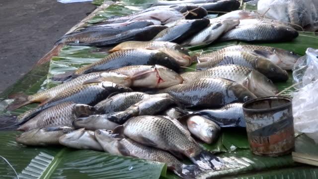 vídeos de stock e filmes b-roll de manhã inle mercado de peixe - peixe fresco