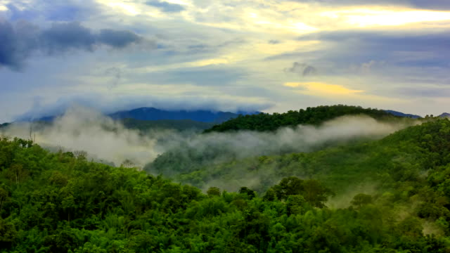 stockvideo's en b-roll-footage met morning mist at tropical rain forest - valley