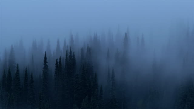 morning mist in forest, mount rainier national park, washington - fog stock videos & royalty-free footage