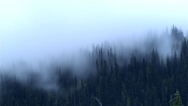 Morning mist in forest, Mount Rainier National Park, Washington