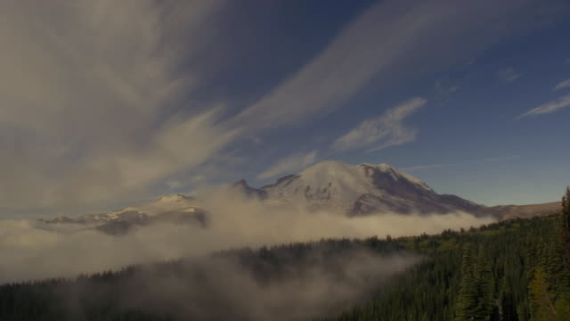 morning mist in forest, mount rainier national park, washington - mt rainier national park stock videos & royalty-free footage