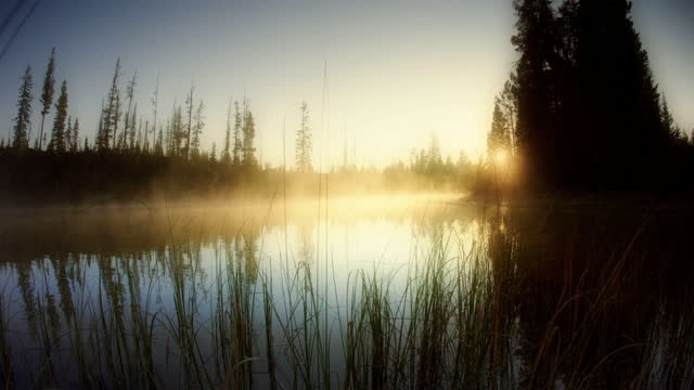 morning mist on lake - pond stock videos & royalty-free footage