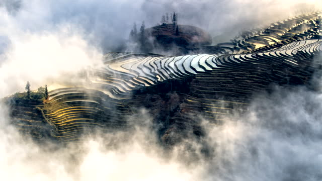Morning mist over rice terraces