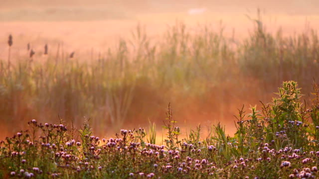 morning mist - polder stock videos and b-roll footage