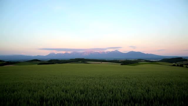 mattina montagne e campo di grano - scena non urbana video stock e b–roll