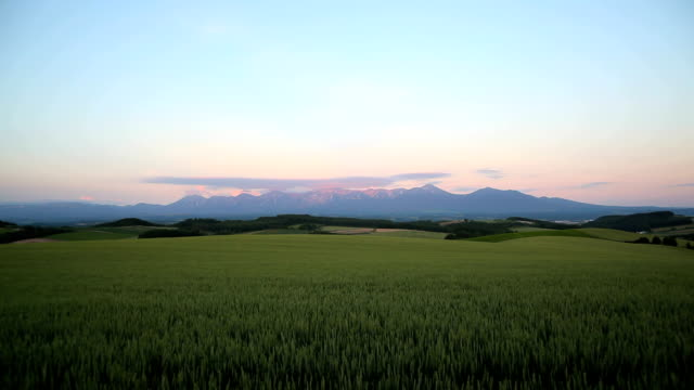 morning mountain and wheat field - hokkaido stock videos & royalty-free footage