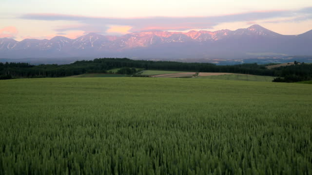 Morning mountain and wheat field