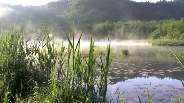 vídeos de stock, filmes e b-roll de manhã, o lago - pântano salgado