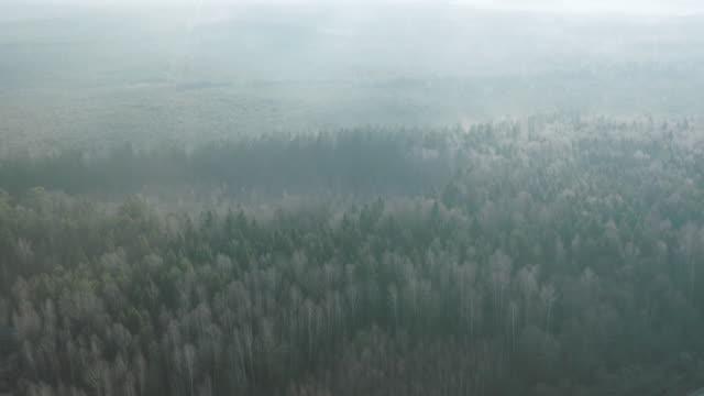 stockvideo's en b-roll-footage met het bos van de ochtendlente - bos