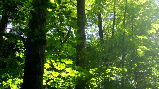 morning sunbeams in green mixed forest - winding road stock videos & royalty-free footage