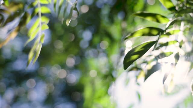 緑の葉を通して輝く朝の日差し。 - 枝点の映像素材/bロール