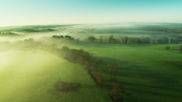 morning sunlight shining through mist in rural alabama - drone shot - cattle stock videos & royalty-free footage