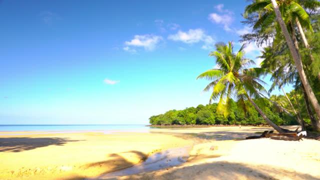 morning sunny tropical beach. sea, sky. pam tree. clouds in sky. ocean. sandy beach. - tropical tree stock videos & royalty-free footage