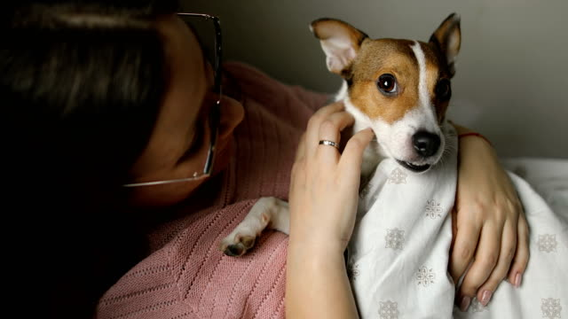morning with my puppy jack russell terrier dog - jack russell terrier stock videos & royalty-free footage