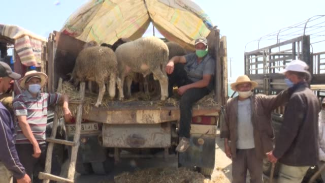 moroccan farmers had hung their hopes on selling their sheep for the eid al-adha feast, to make up for a year of drought and the economic paralysis... - paralysis stock videos & royalty-free footage